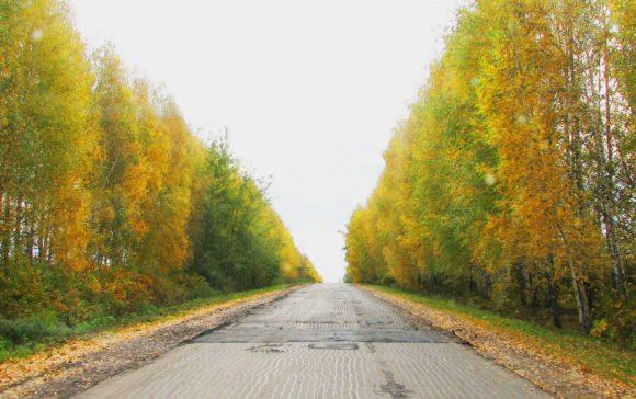 Рязанская обл., Касимовский р-н.  Осень 2012.