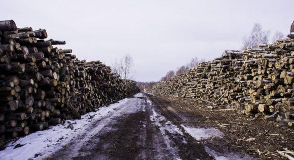 Калужская область, Малоярославецкий р-н. Весна 2014.