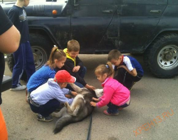 Дети не давали собаке проходу всю поездку :)))
