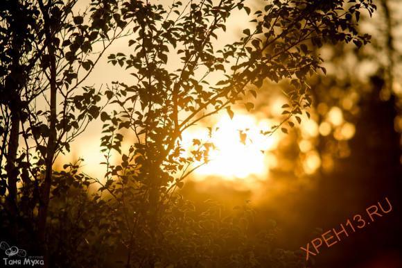 пос. Рабочеостровс, Кемскй район, респ. Карелия. Лето 2014.