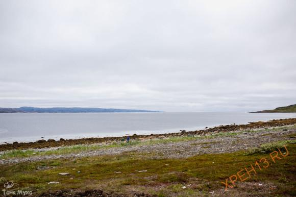 Кольский полуостров, Мурманская область, полуостров Рыбачий. Лето 2014.