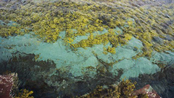 Мурманская область, полуостров Средний, Баренцево море. Лето 2014.