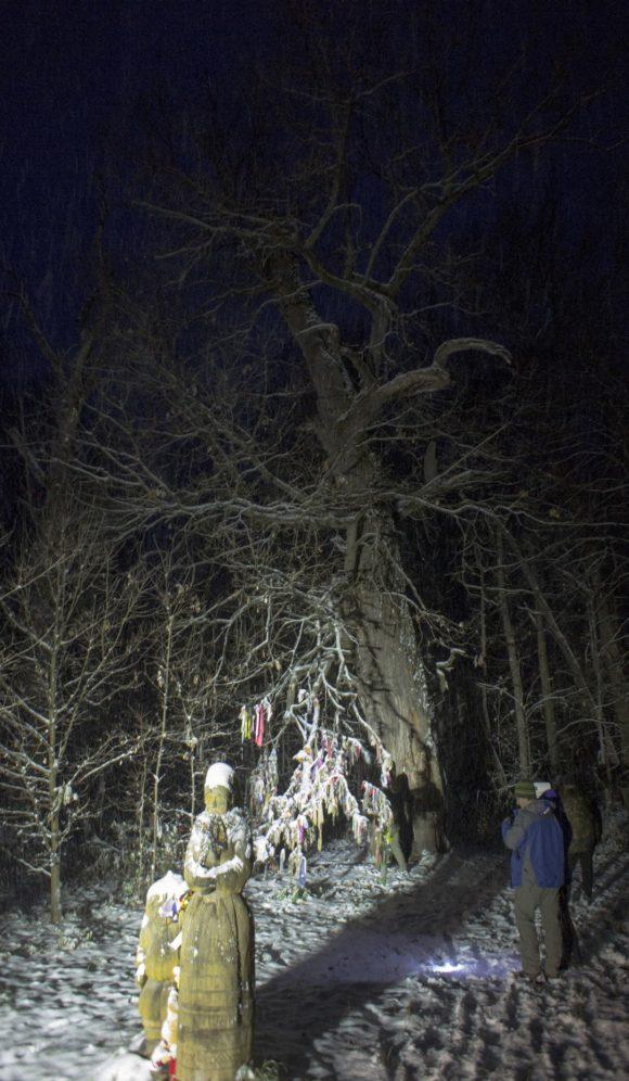 Священный дуб. На табличке, установленной возле дерева, написано, что ему почти 500 лет.