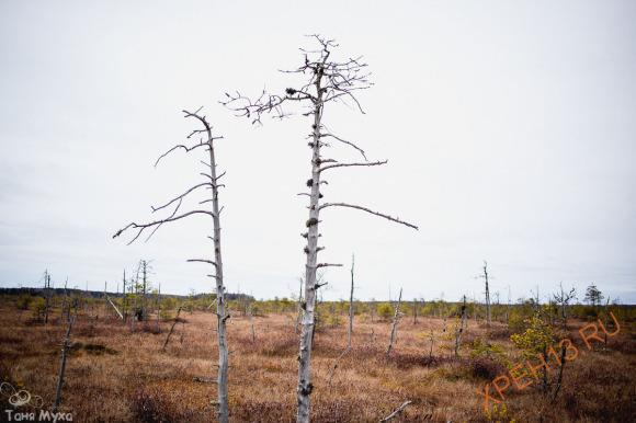 Костромская обл., Чухломский р-н., Святое болото. Осень 2014.