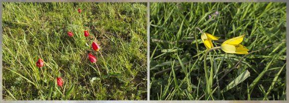 с. Приютное Приютненского района респ. Калмыкия. Весна 2015.