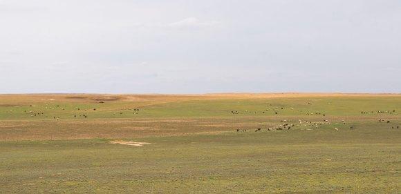 Сянцик, Яшкульскй район респ. Калмыкия. Весна 2015.