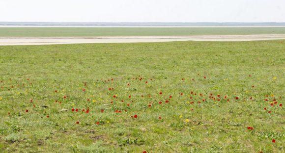 Приютненский район респ. Калмыкия. Весна 2015.