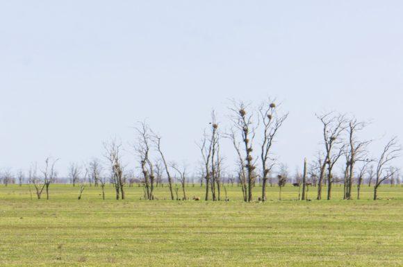 респ. Калмыкия. Весна 2015.