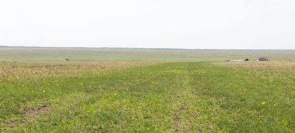 Ростовская область. Весна 2015.