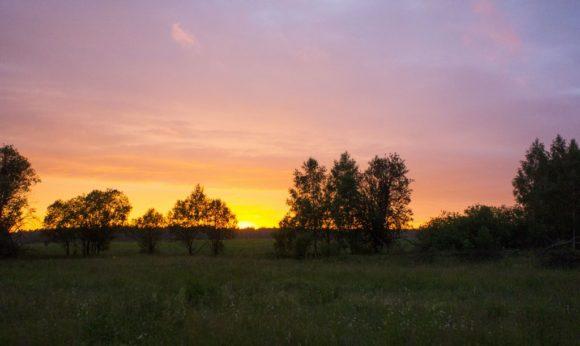 Калужская область, Малоярославецкий район. Лето 2015.