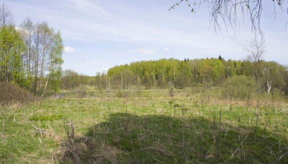 Калужская область, Медынский район. Весна 2015.