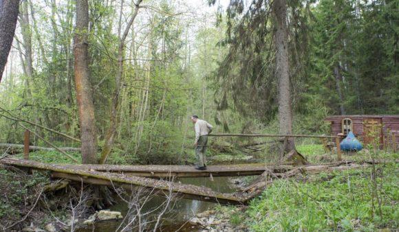 Калужская область, Медынский район, близ д. Гусево. Весна 2015.