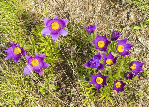 Казахстан. Весна 2016.