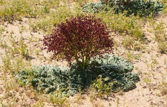 Трава и колючки постепенно сменились песчаником. Внимание привлекли вот такие кустики. Я все гадала на чем они растут. Оказалось, что корень каждого кустика прикрывают очень жесткие плотные листья.