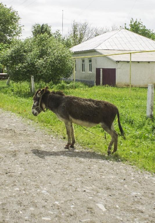 Казахстан, Жамбылская область. Весна 2016.