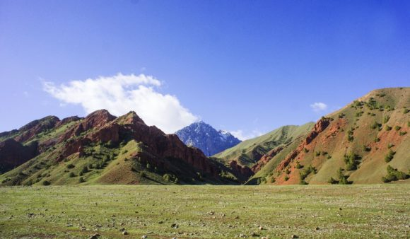 Вдали возвышались горные вершины, вокруг бродили стада баранов