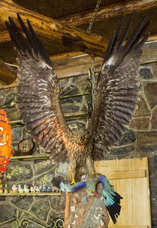 Птица, притаившаяся на барной стойке поближе - зрелище не для слабонервных.
