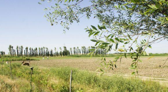Сразу после рассвета на поля начали съезжаться на осликах узбеки.