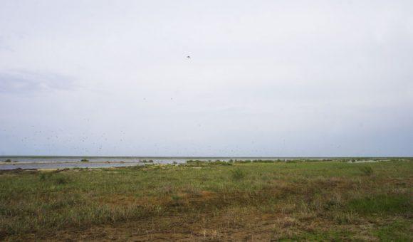 Озеро Сарыбас (Жёлтая голова) Некогда залив Аральского моря. Сейчас - пересыхающее озеро.