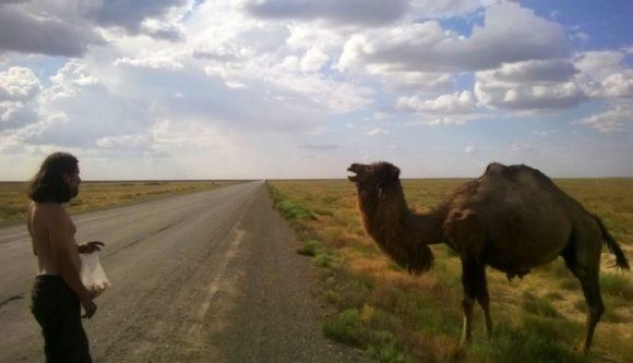 Только верблюды гуляют вдоль дороги. Этого Сашка пытался покормить, при чем делал это очень настойчиво. Верблюд вместо вафель продолжал жрать колючки.