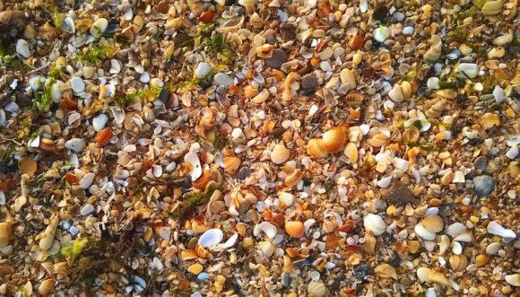 А какой тут был ракушечный берег! Ракушки гораздо более ярких цветов, чем на Черном море и Азове.