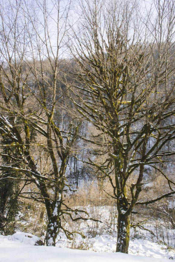 Вокруг подозрительно зловещие деревья.
