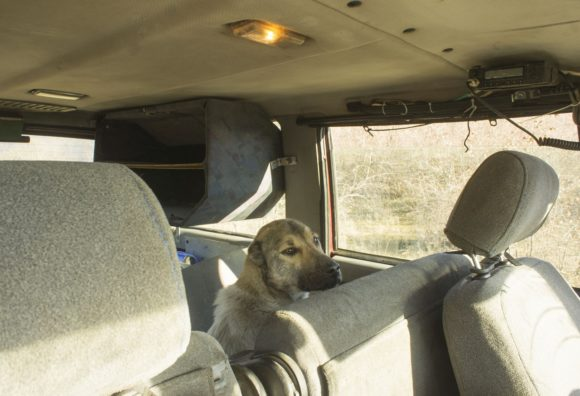 Освободили заднее сидение в Патриоте Олега и загрузили туда Риту (так мы назвали собаку).