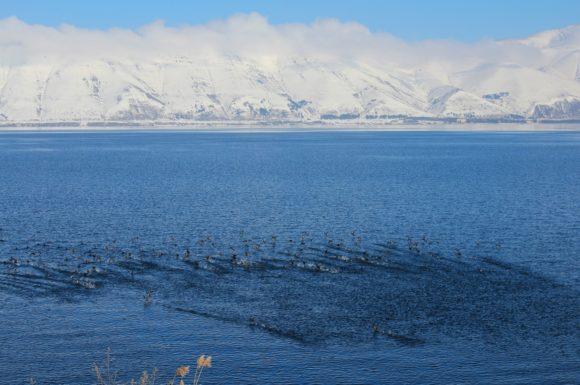 Это самое большое озеро Кавказа (площадь 1240 км²).