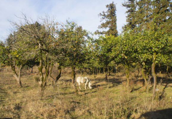 Неподалеку паслась белая лошадь - сложно представить себе более идеалистическую картину.