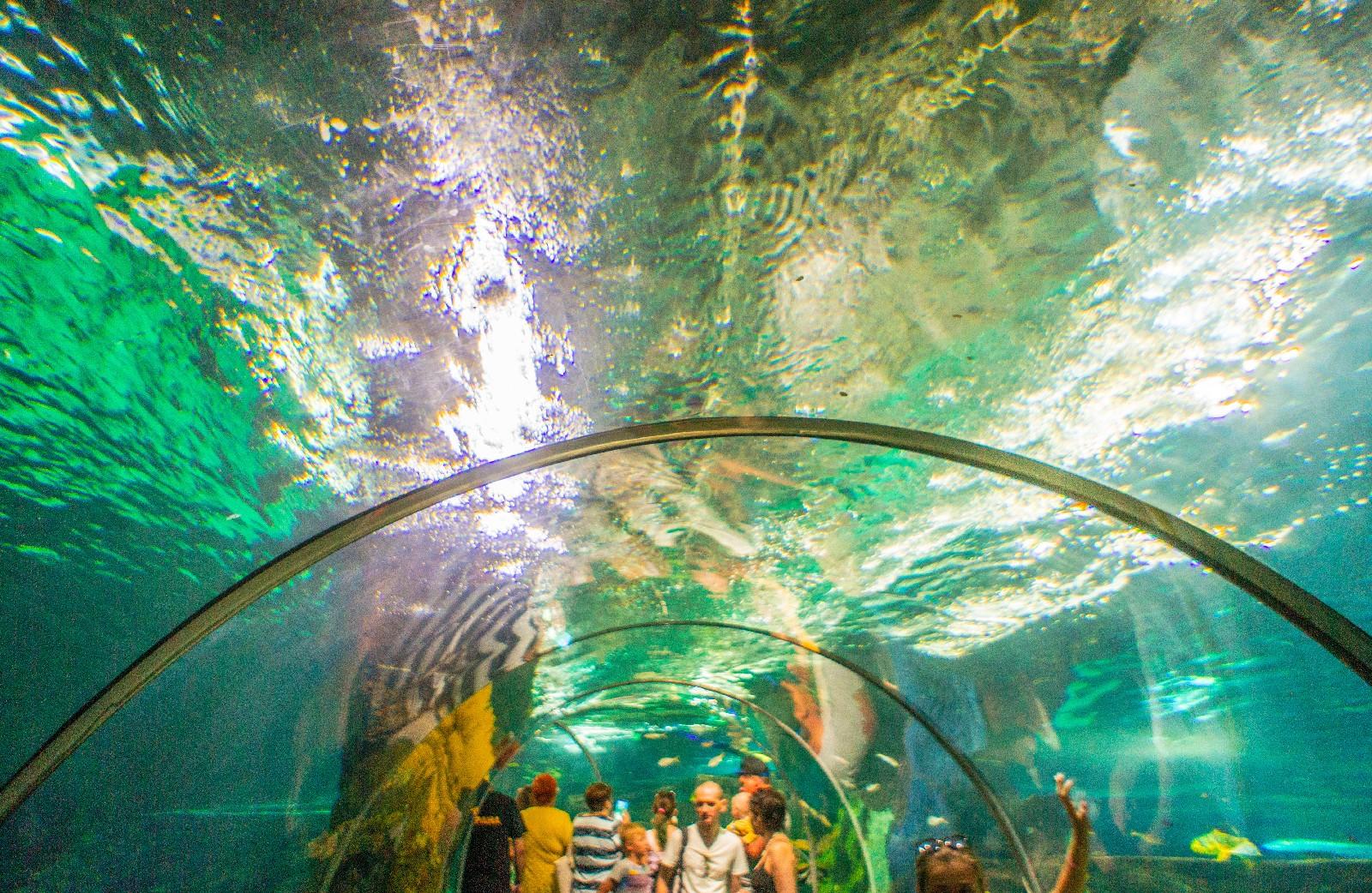 большой адлерский океанариум фото людей